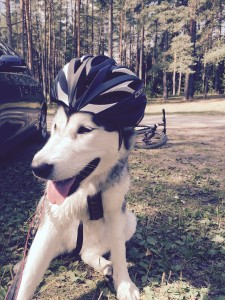 No, your dog doesn't need a helmet for Bikejoring or Scootering, but you do!