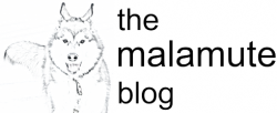 the malamute blog