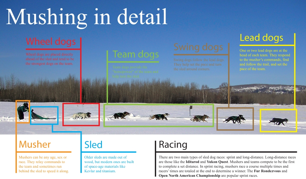 The composition of a sled dog team.