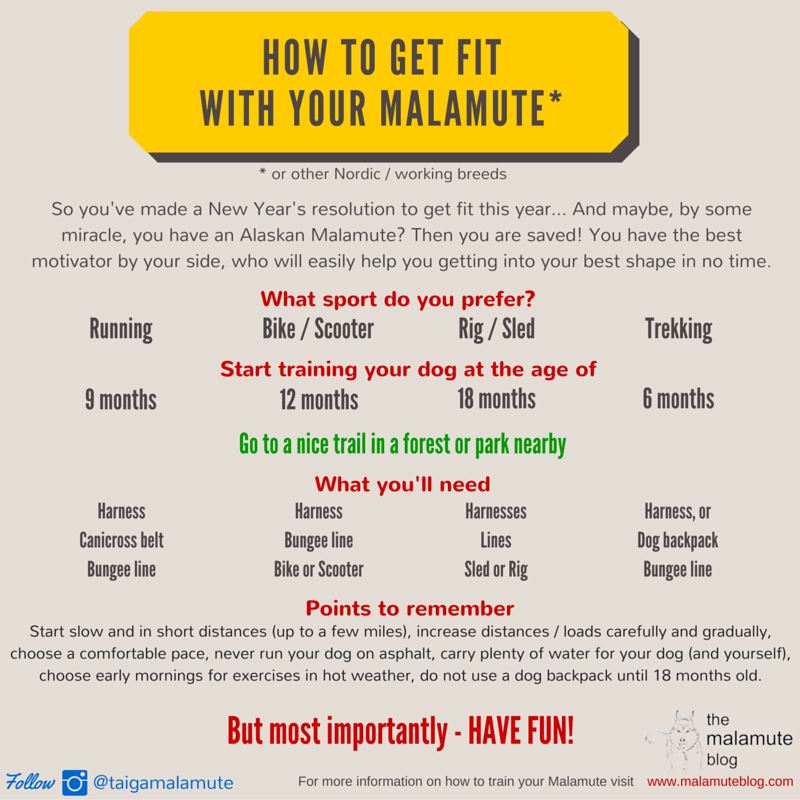 Get fit with your Malamute