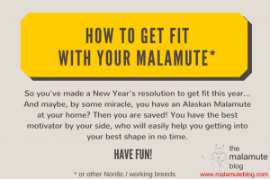 get fit with an alaskan malamute
