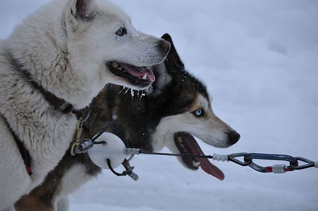 PETA vs Sled Dogs